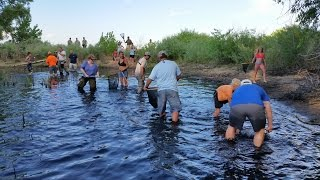 Chatfield Carp Rescue 2014