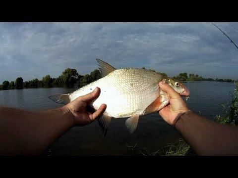 рыбалка в татарстане 2016 август