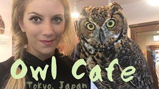 Owl Cafe - Tokyo, Japan (Harajuku)