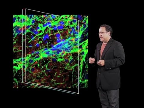 Neural Stem Cells - Alfredo Quiñones-Hinojosa  (Johns Hopkins/HHMI)
