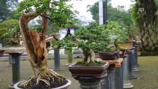 Festival Bonsai Dihelat di Garut Dibanjiri Ratusan Jenis Bonsai Unik - NET5