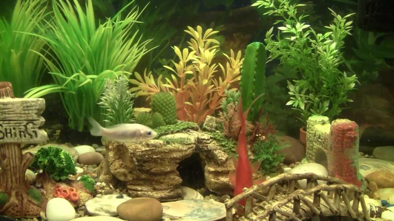 Best Goldfish Aquarium W Filter Food Plants Ornaments