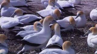 Vídeo 112 de Comunidade Católica Shalom