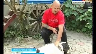 Собака с мировым именем живет на Ставрополье
