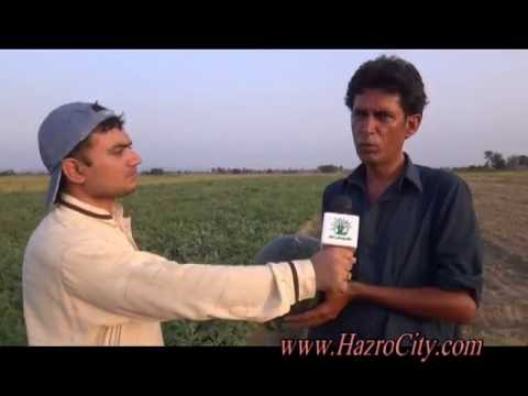Water Melon & Musk Melon Fields in Asghar village, Hazro. Talk with Mohammad Ejaz of Asghar village.