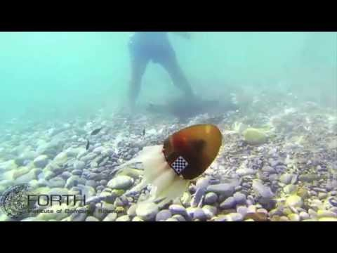 Robot Octopus Takes to the Sea