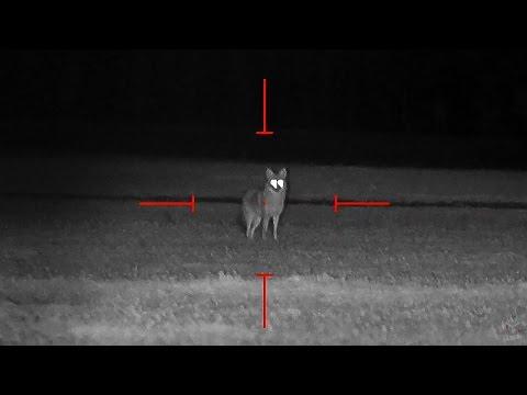 Coyote Hunting at Night - Dirt Naps 6