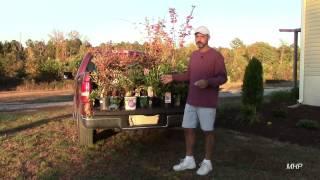 Landscaping - Saving Money at Lowe
