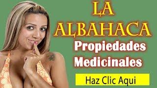 Propiedades de la Albahaca, Usos Medicinales y curativas, Beneficios para la Salud