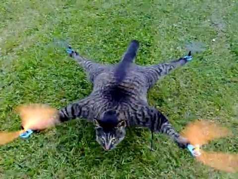 Kediyi Helikoptere Çevirmek