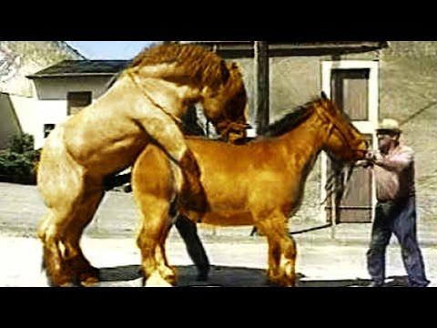 ТОП 5 Ужасные СПАРИВАНИЯ Животных в Сравнении с Человеком!