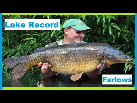 Record Common Farlows Lake Record Common