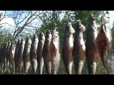 как ловить рыбу на реке пур