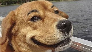 Funny Dogs with Fake Eyebrows Video Compilation 2013
