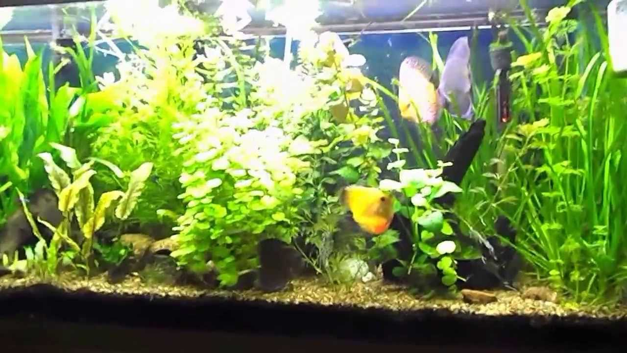 Basics Of Maintaining A Fresh Water Planted Aquarium Youtube