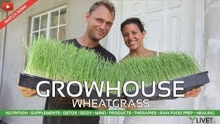 WHEATGRASS GROW HOUSE & HOW TO GROW ◦ LIVET.tv with TONAMY & TOM WHITMIRE of LIVET LIFESTYLE