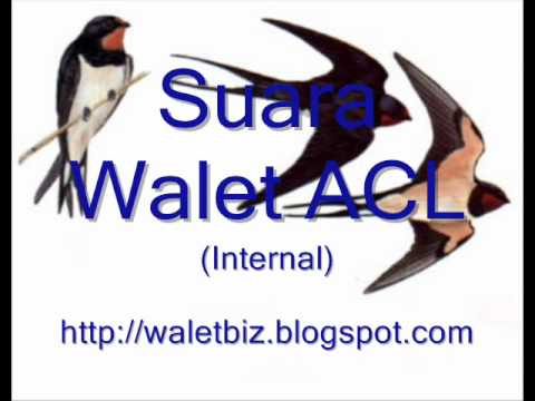 Walet ACL.wmv