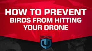 download lagu How To Prevent Birds From Hitting Your Drone - gratis
