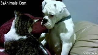 Funny Animals - Animales Graciosos - Especial Gatos FUNNY CATS