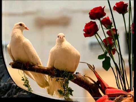 Песни дворовые - Голуби целуются на крыше
