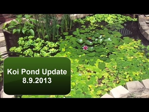 Diy water lilies floating pot for pond how to make how for Build a koi pond yourself