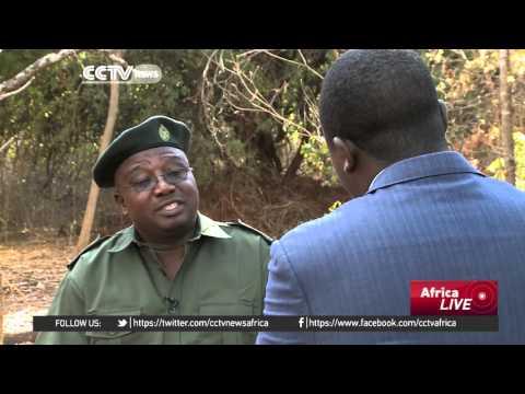 Placing lions on endangered list could affect Zimbabwe revenue