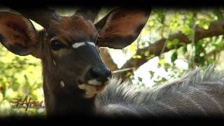 Ubizane Wildlife Reserve Hluhluwe South Africa - Visit Africa Travel Channel