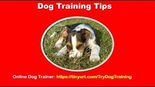 Professional Dog Training Tips For Dog Owners
