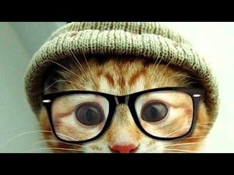 Прикольные коты и кошки  Пушистые видео приколы