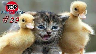 ПРИКОЛЫ 2019, ТОП СМЕШНЫХ ВИДЕО С ЖИВОТНЫМИ/Смешные животные/Смешные кошки/TOP FUNNY PETS # 23