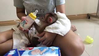 Monkey Beo has to wear diapers?