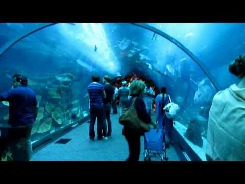 Dubai Mall Aquarium