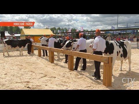 На «Белагро-2018» выбрали лучшую корову страны. Как это было