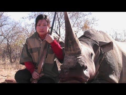 Bloody rhino horn trade in Vietnam - BBC News