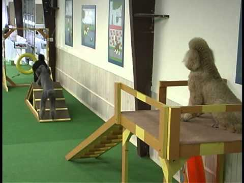 Agility Course For Dogs Dog Indoor Obstacle Course
