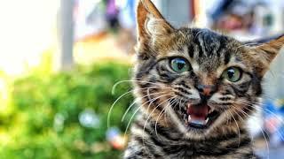 Nằm mơ thấy con mèo là điềm báo gì  - Giải mã giấc mơ thấy là điềm báo gì ?