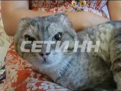 Зверская жестокость против человеческой доброты - избитого до полусмерти кота спасли всем миром