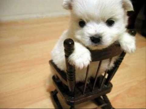 perritos bonitos - YouTube