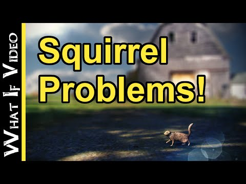 WIV Short: Squirrel Problems!