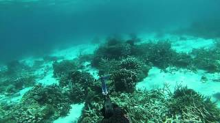 Spearfishing The Bunker Group