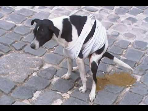 Havana Dog Takes a BIG DUMP!