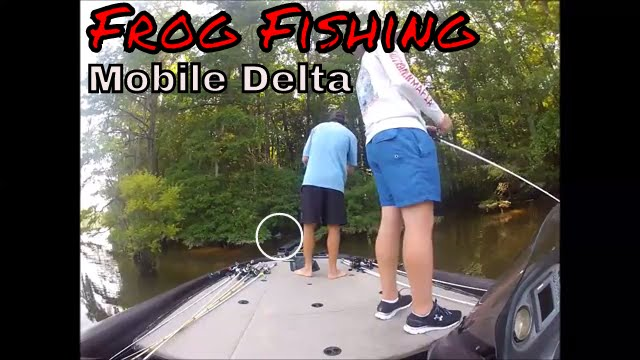 Bass Fishing On The Mobile Delta   Frog Fishing