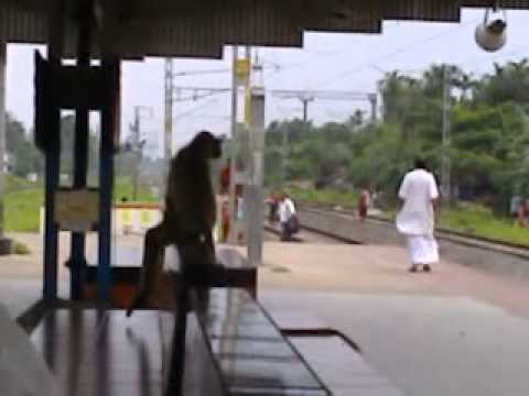 A Funny Monkey In Rail Platform video