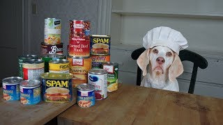 Chef Dog Makes Canned Food Casserole: Funny Dog Maymo