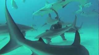 Scuba Diving in the Bahamas (Shark and Wreck Dives) [GoPro HD]
