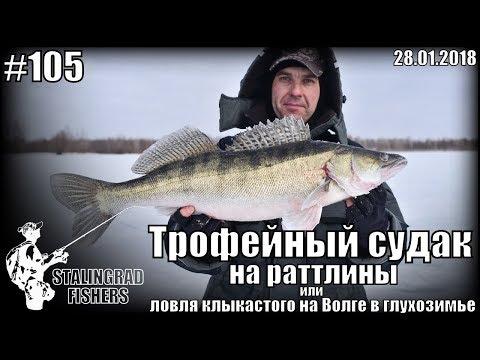 Трофейный судак на раттлины или ловля  клыкастого на Волге в глухозимье - 28.01.2018