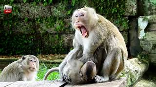 Where Have Popeye Has Sweetpea Makes Mum Lol Lol For Milk oh hard to say Youlike Monkey 298