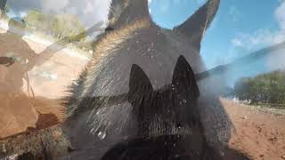 slow motion German Shepherd Lexi GoPro Compilation 2018
