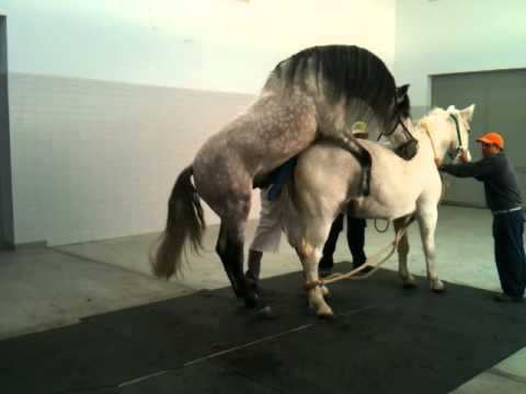 Horse mating in University