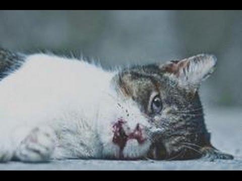 Топ 5 самых трогательных видео на YouTube. Которые заставят вас заплакать. До слез!!! 2 Часть